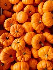 500, Pumpkin, Pictures, Hd