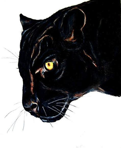 panther art big black leopard cat wildlife drawing art