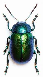 Best 25  Beetle Tattoo Ideas On Pinterest