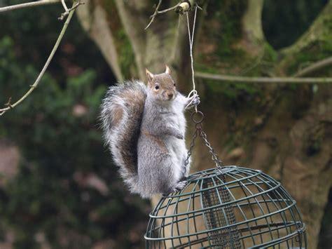 squirrel proof by samboardman on deviantart