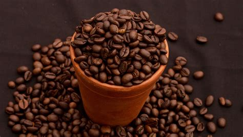 You can buy green coffee beans online, also available in capsules and powder form, by choosing from a wide range of authentic brands promising. Pure Coffee, South Indian, Roasted beans | JCI