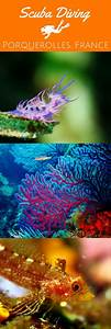 [PHOTO ESSAY] The underwater colours of Porquerolles ...