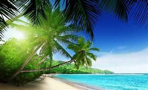 Bilder Von Palmen : visa paradis strand palmer tropisk 736wm ~ Frokenaadalensverden.com Haus und Dekorationen