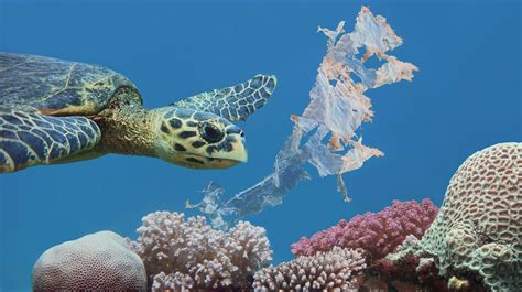 The Effect Of Plastic Pollution On Marine Life
