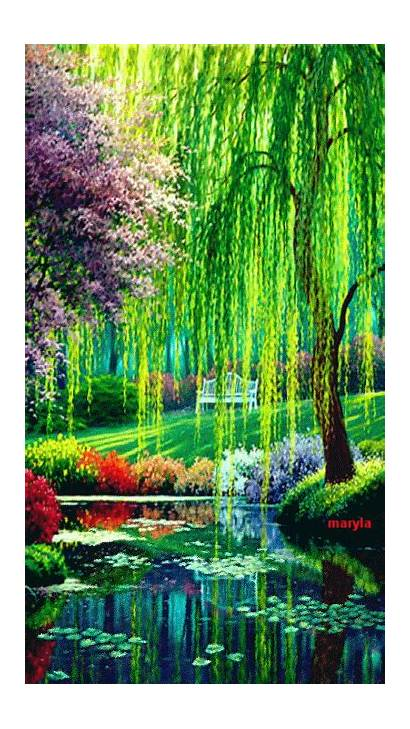 Willow Tree Weeping Nature Pond Landscapes Flowers