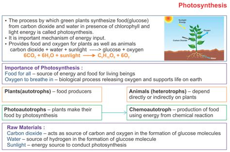 icse solutions  class  biology photosynthesis