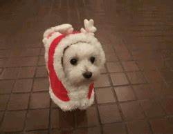 Cute Dog GIFs - Find & Share on GIPHY