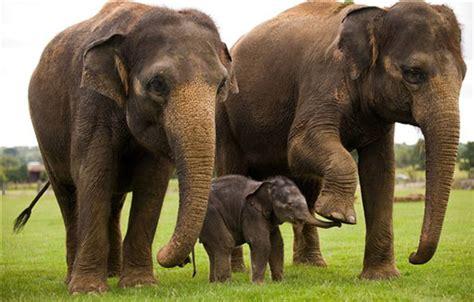 Revivendo Animais Extintos Com A Ajuda Da