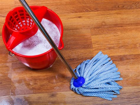 eliminate fleas on hardwood floors russdalescarpet or laminates for rented property russdales