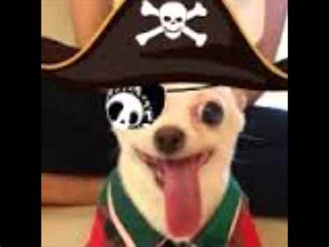 the pirate dogs yogurt the pirate song