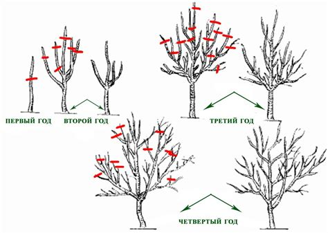 diagram for pruning fruit trees diagram for fermentation