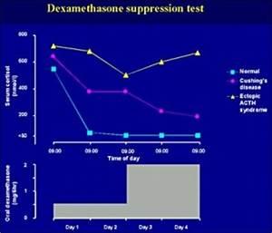 Dexamethasone suppression test - Cat