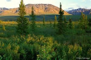 Taiga Coniferous Forest Biome