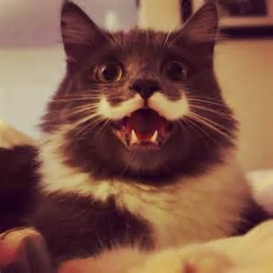 hamilton the cat cuteness attack