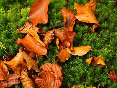Leaves Autumn Wallpapers Pile Grass Nature Scenes