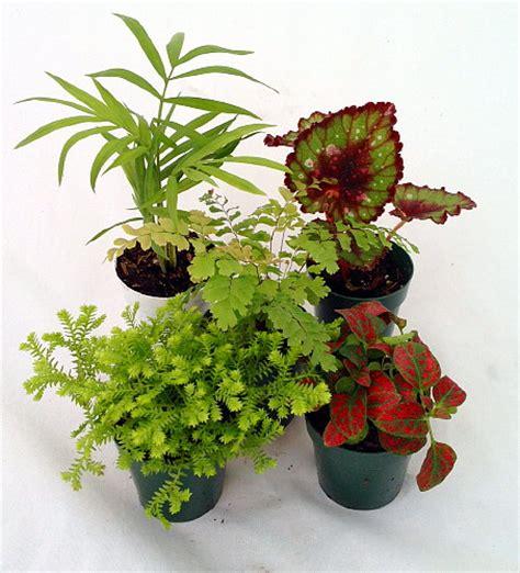 small terrarium plants terrarium plants assortment of 5 different plants in 2 quot pots ebay