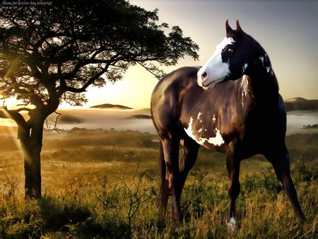 beautiful horse horses animals background wallpapers