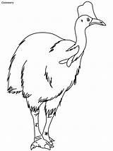 Coloring Cassowary Pages Bird Booby Rainforest Footed Daintree Cockatiel Habitat Print Drawings Ws sketch template