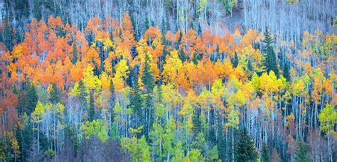 why do trees change color why aspen leaves change color during fall four seasons