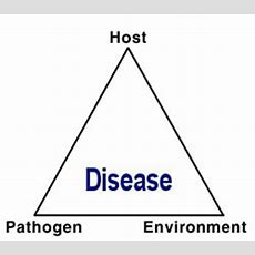 The Disease Triangle A Plant Pathological Paradigm Revisited