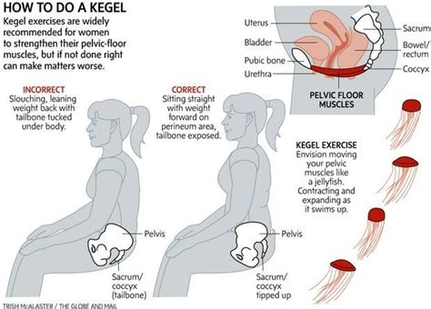 pelvic floor spasms exercises 17 best images about pelvic organ prolapse physio on