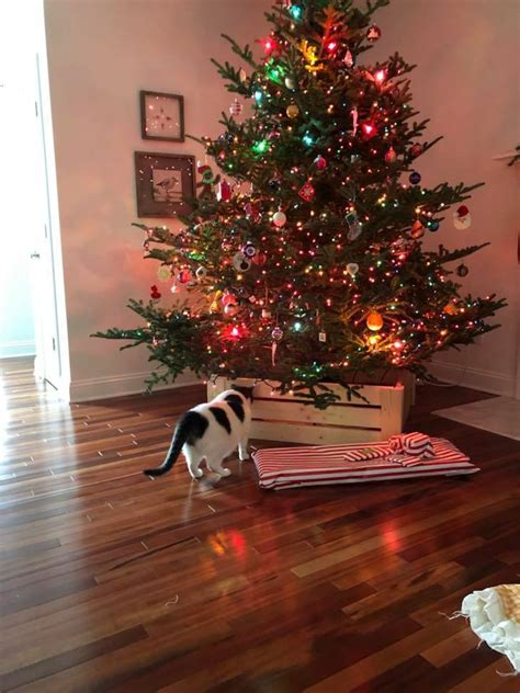 ana white christmas tree collar diy projects
