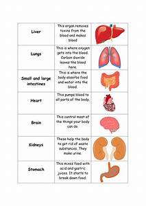 Human Body Organs Card Sort By Sarahprice22