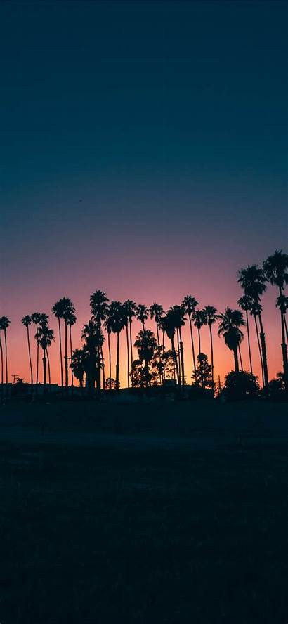 Iphone Palm Sunset Trees During Wallpapers
