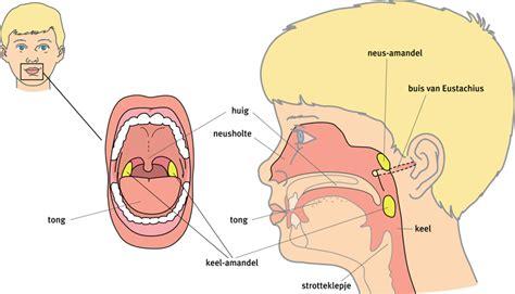 pijnlijke klieren hals oorpijn