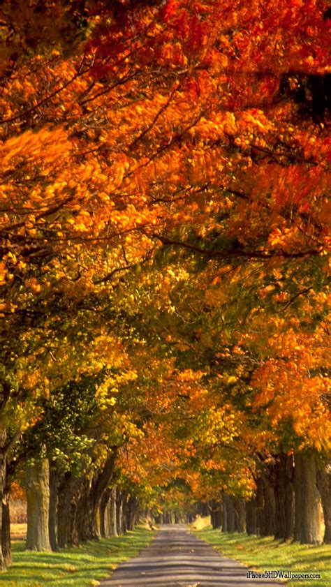 Find your perfect hd wallpaper for your phone, desktop, website or more! Fall Wallpaper for Phone - WallpaperSafari