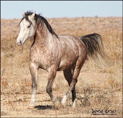 ferrari horse vs mustang horse 265 best images about horses grey gray on pinterest