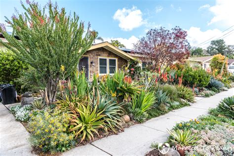 succulent front yard succulent gardens front yard www imgkid com the image kid has it