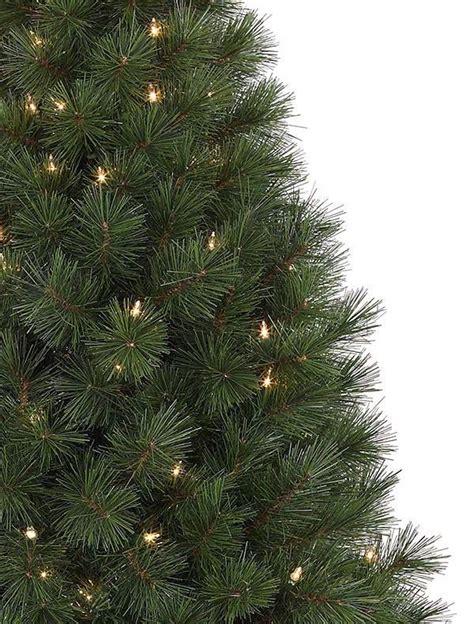 Kiefer Als Weihnachtsbaum by Potted White Pine Balsam Hill