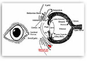Cherry Eye Diagram