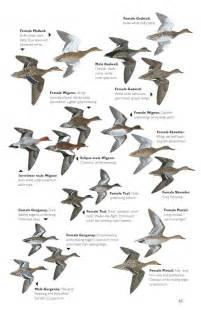 Bird Species Identification Guide