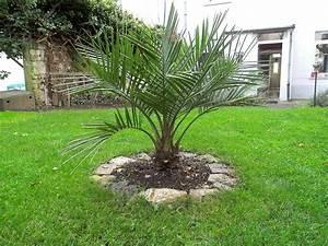 Palme Für Drinnen : palme f r garten palme im garten pflanzen palme im garten pflanzenwas ist garten anders eine ~ Sanjose-hotels-ca.com Haus und Dekorationen