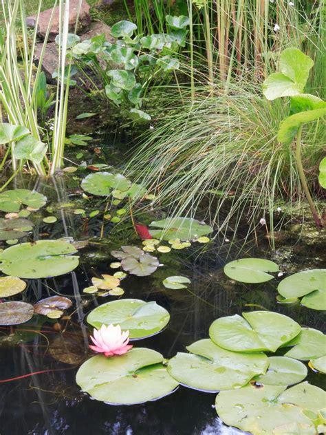 adding plants to your garden pond hgtv