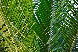 Palm Sunday: My Place & Passion - Keith Burnett Ministries