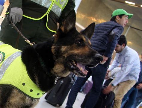 Kolumbijas banda izsludina milzu atlīdzību par narkotiku meklēšanas suņa nogalināšanu   LA.LV