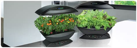 aero herb garden aero garden aerogarden sprout led 2 pack indoor gardening 1168