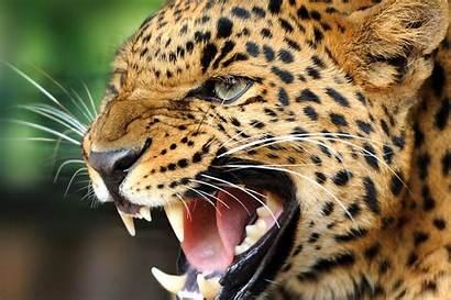 Animals Wallpapers Animal Wild Desktop Planet
