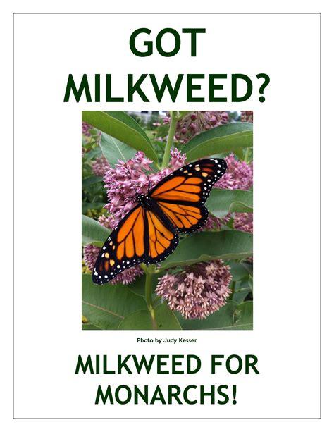 greater cincinnati has success with milkweed plant
