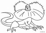Lizard Coloring Pages Frilled Printable sketch template