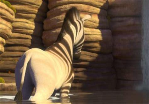 images  khumba  zebra  pinterest