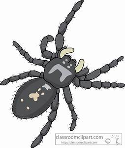 Spider Clipart : common_jumping_spider : Classroom Clipart
