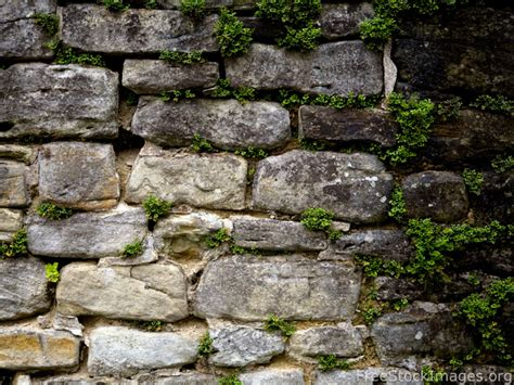 stock images  stone wall green plants  sequence