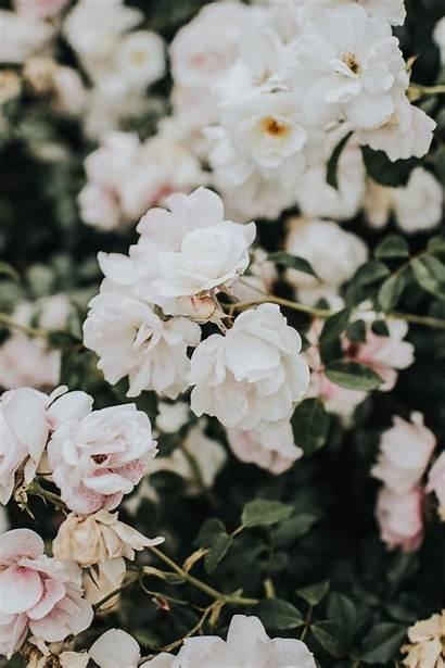 Flower Floral Unsplash Supreme Iphone Flowers Wallpapers