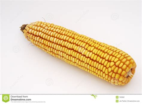 ear  corn stock photo image  millet gasoline corn