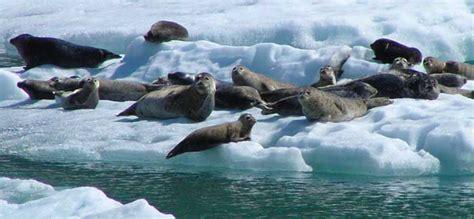 alaska adventure south sawyer harbor seals