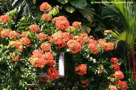 nurserry tanaman hias